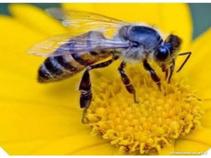 Citaten Over Bijen : Lezing over bijen bij boekendonck prinsenbeeknieuws