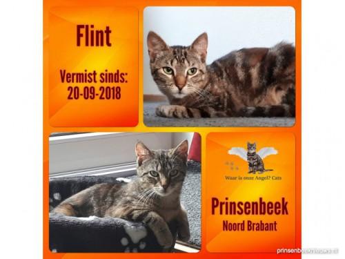 Veel katten kwijt in Prinsenbeek