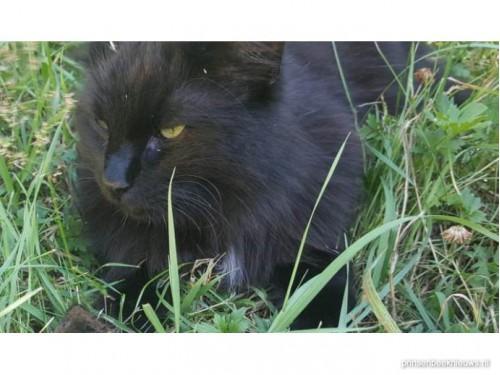 Kat vermist Deurnestraat