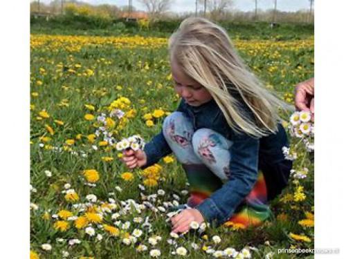 Wie helpt collecteren voor wilde bloemen