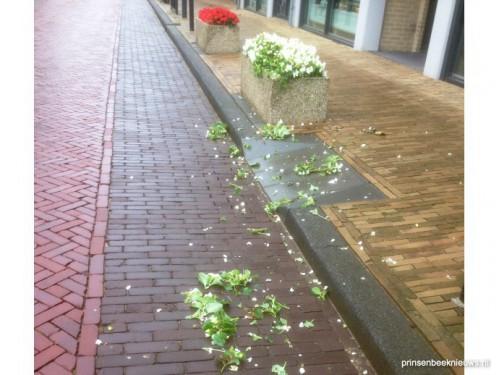 Agressief van rode en witte bloemen?