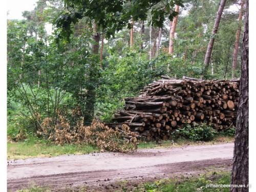 Vervolg houtoogst Liesbos