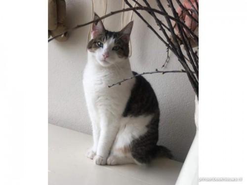 Kat vermist omgeving Vaandelstraat