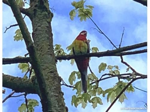 Van wie is deze papegaai?